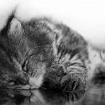 рисунок-карандашем-котенок