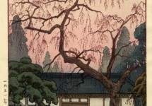 Cherry blossom by the gate 1951