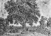 """""""Большое дерево"""""""