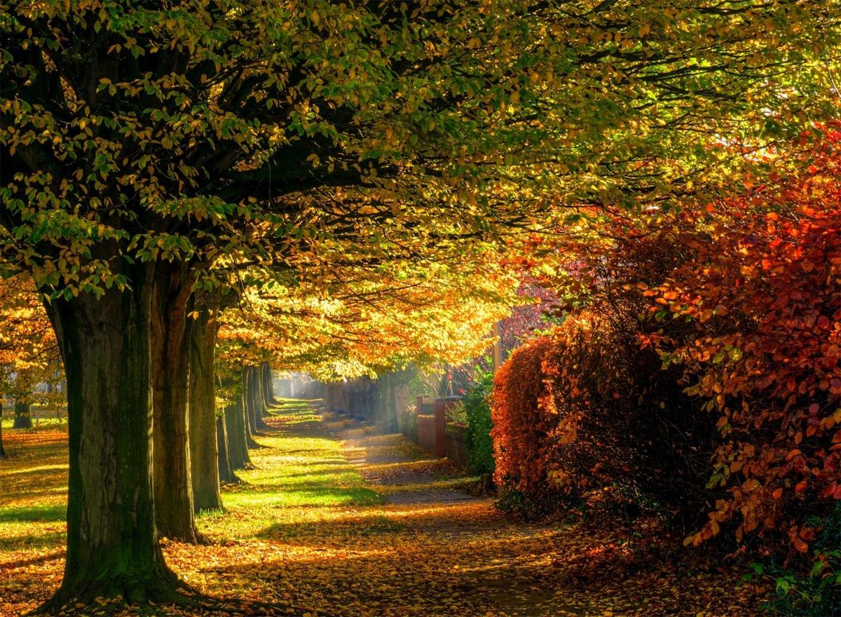 Осень5