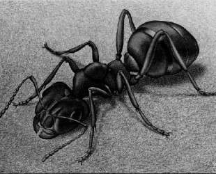 Ant — Мауриц Корнелис Эшер