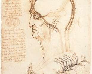 Comparison of scalp skin and onion — Леонардо да Винчи