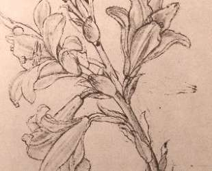 Drawing of lilies, for an Annunciation — Леонардо да Винчи