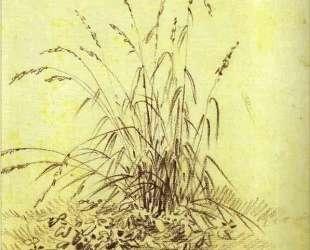 Grass — Александр Орловский
