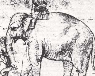 Hanno, The Pope's Leo X Elephant — Рафаэль Санти
