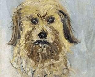 Голова собаки — Клод Моне
