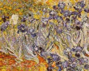 Irises — Роберт Сильверс