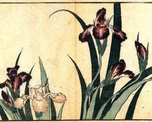 Irises — Кацусика Хокусай