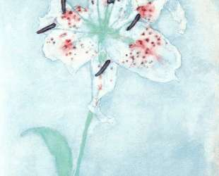 Lily — Леонардо да Винчи
