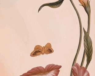 Mouth of Flower — Октавио Окампо