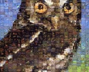 Owl — Роберт Сильверс