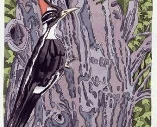 Pileated Woodpecker — Нил Уэлливер
