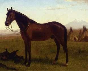 Portrait of a Horse — Альберт Бирштадт