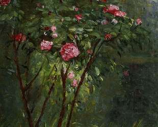 Rose Bush in Flower — Гюстав Кайботт
