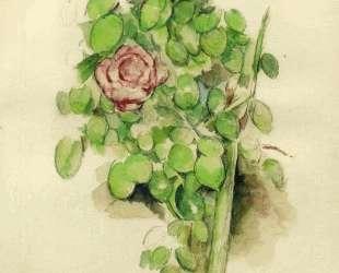 Rose Bush — Поль Сезанн