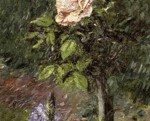 Rose with Purple Iris, Garden at Petit Gennevilliers — Гюстав Кайботт