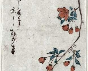 Small Bird on a Branch of Kaidozakura — Хиросиге