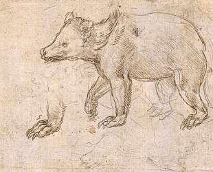 Studies of a BeWalking — Леонардо да Винчи
