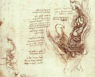 Studies of the sexual act and male sexual organ — Леонардо да Винчи