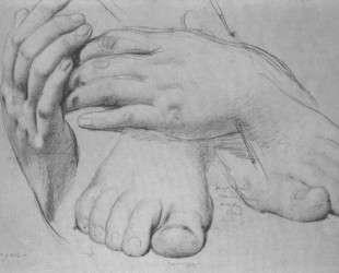Этюд рук и ног для Золотого Века — Жан Огюст Доминик Энгр