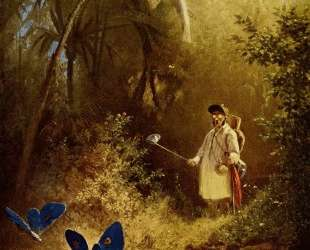 The Butterfly Hunter — Карл Шпицвег