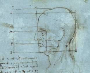 The proportions of the head — Леонардо да Винчи