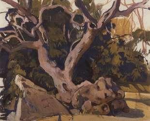 Деревья в Крыму — Зинаида Серебрякова