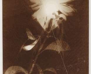 Untitled [flower] — Ласло Мохой-Надь