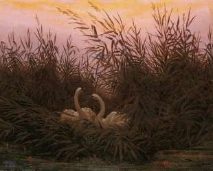 Swans among the reeds at the first Morgenro — Каспар Давид Фридрих
