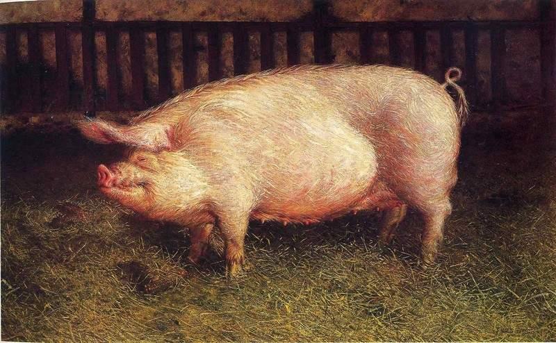 «Портрет свиньи» 1970