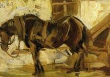 Small Horse Study 1905