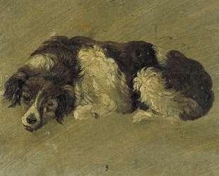 A dog — Тео ван Дусбург