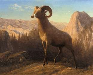 A Rocky Mountain Sheep, Ovis, Montana — Альберт Бирштадт