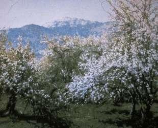 Abandoned Orchard — Ричард Уитни