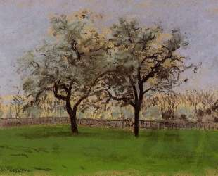 Apples Trees at Pontoise — Камиль Писсарро
