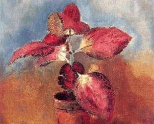 Begonia in a Pot — Одилон Редон