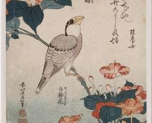 Big beak and mirabilis — Кацусика Хокусай