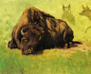 Bison with Coyotes in the Background — Альберт Бирштадт