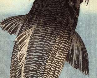 Black carp — Утагава Куниёси