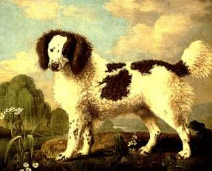 Brown and White Norfolk or Water Spaniel — Джордж Стаббс