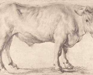 Bull — Питер Пауль Рубенс