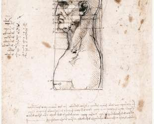 Bust of a man in profile with measurements and notes — Леонардо да Винчи
