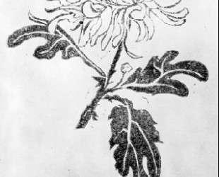Chrysanthemum — Мауриц Корнелис Эшер