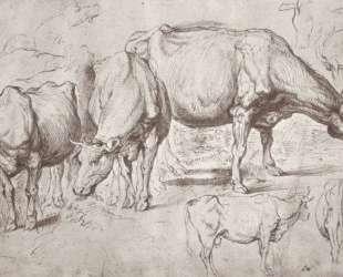Cows — Питер Пауль Рубенс