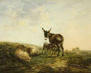 Donkey and Sheep — Уильям Шайер