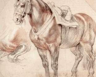 Etude of horse — Питер Пауль Рубенс
