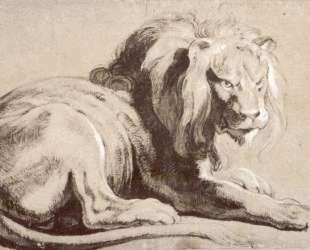 Etude of lion — Питер Пауль Рубенс