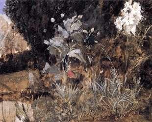 Набросок цветов для 'Очарованного сада' — Джон Уильям Уотерхаус