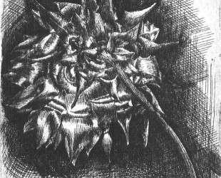 Flower — Мауриц Корнелис Эшер