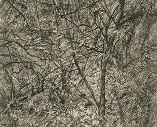 Сад зимой — Люсьен Фрейд